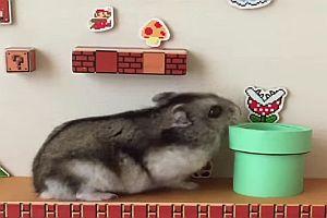 Hamster als Super Mario