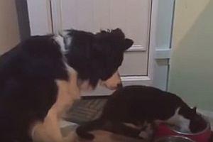 Hund möchte auch etwas fressen