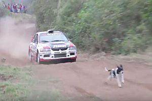Hund auf der Rallye-Strecke