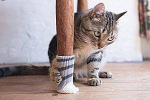 Katzen-Socken für Stuhlbein