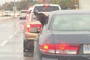 Hund versucht den Regen zu fressen