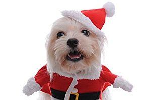 Der Hund als Weihnachtsmann