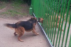 Hundestreit an einem Einfahrtstor