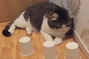 Katze als Hütchenspieler