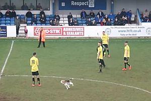 Hund auf einem Fußballplatz