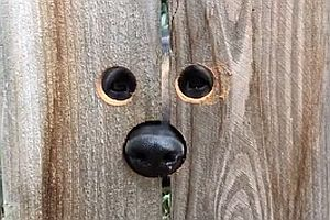 Guckloch für einen Hund