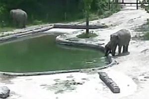 Zwei Elefanten retten Elefantenbaby
