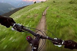 Mountainbiker verfolgt ein Murmeltier