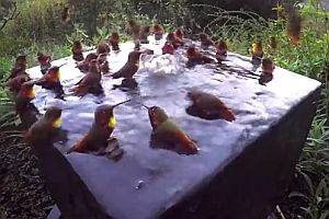 Ein Schwimmbad für Kolibris