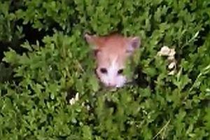 Kätzchen im Busch