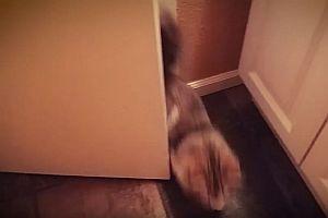 Diese Katze kennt keine Privatsphäre