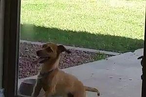 Hund öffnet Schiebetür