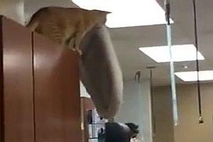 Katze springt auf ein Kissen