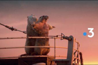 Murmeltiere in großen Filmmomenten