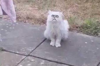 Besuch von einer hässlichen Katze