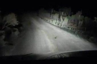 Känguru auf der Straße
