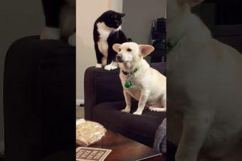 Katze überlegt bevor sie angreift