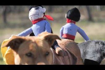 Hunde-Cowboys
