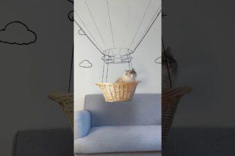 Katze fliegt im Heißluftballon