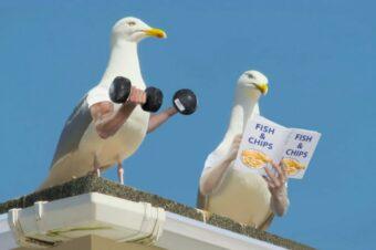 Wenn Vögel Arme hätten