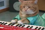 Keyboard Cat Reborn