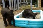 Baby-Elefanten im Pool